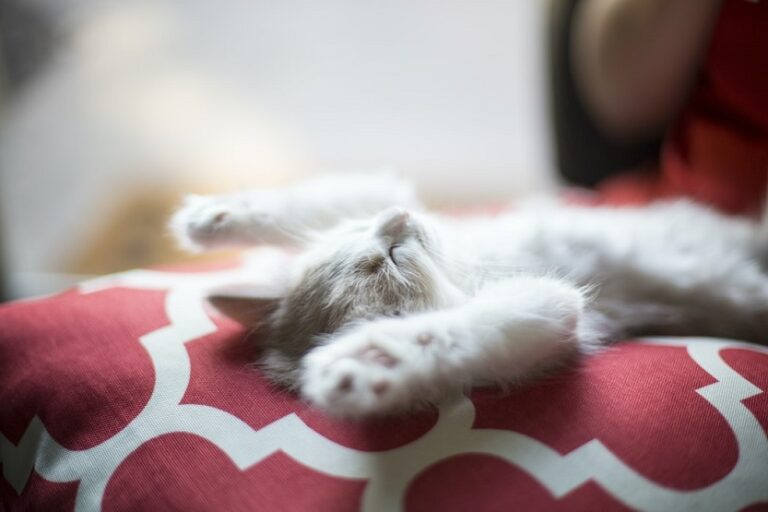 Colchones cama dormir gato (Jonathan Fink Unsplash)