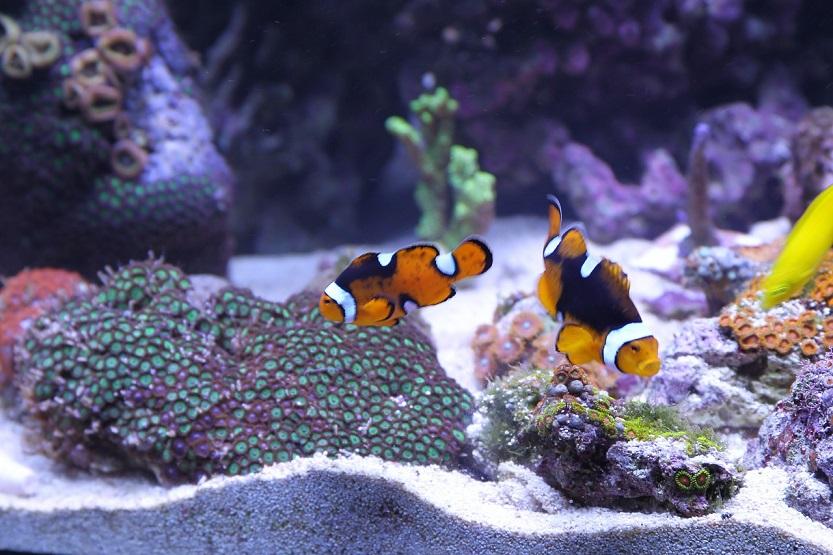 Lee más sobre el artículo Peceras para tener peces en espacios pequeños