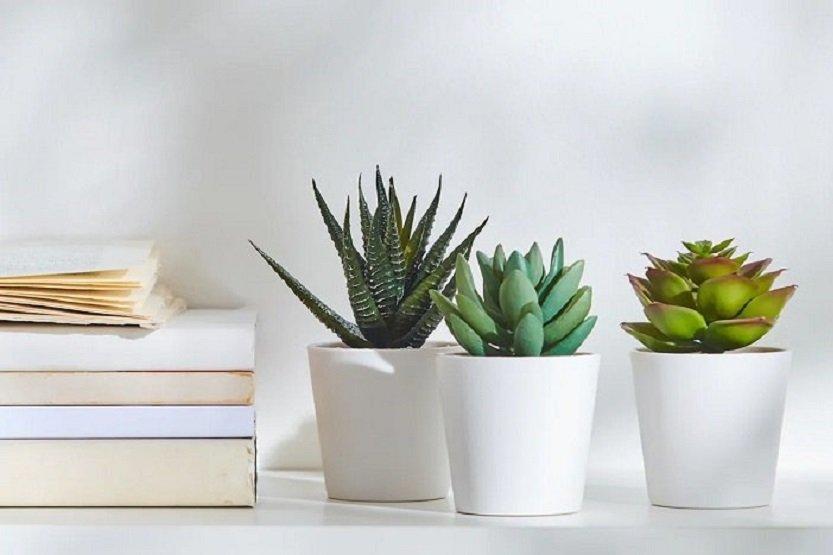 Lee más sobre el artículo Ventajas de las plantas artificiales de Ikea sobre las naturales