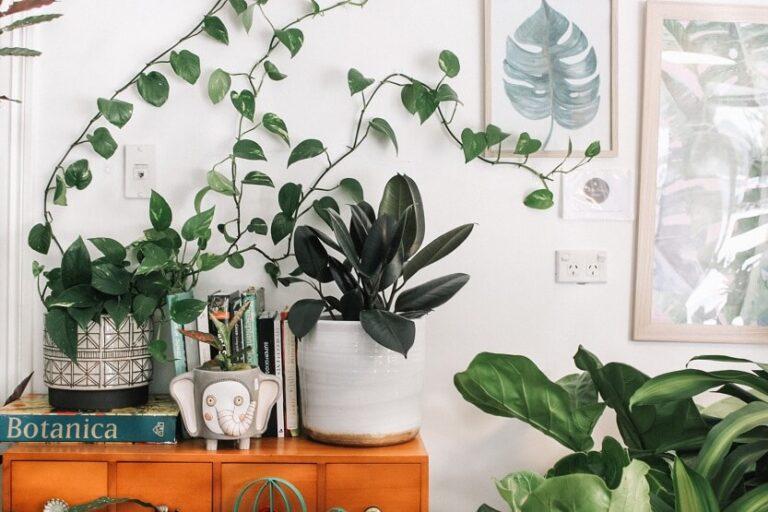 Plantas de interior que más duran